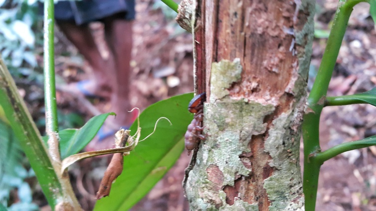 A small scorpion we have encountered while going to Cabudadan Falls