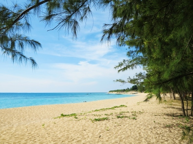 The cool, green color of the pine trees complement the golden sand and the aquamarine waters in Jomalig.