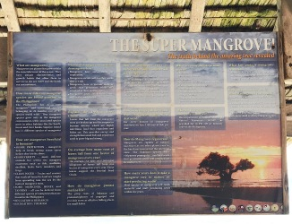 Mangroves are super trees!