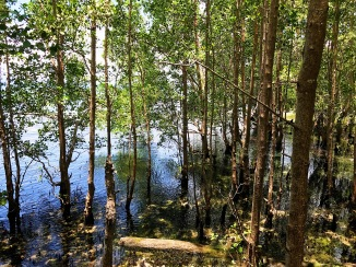 A spring was said to be present in this area of the mangrove park,