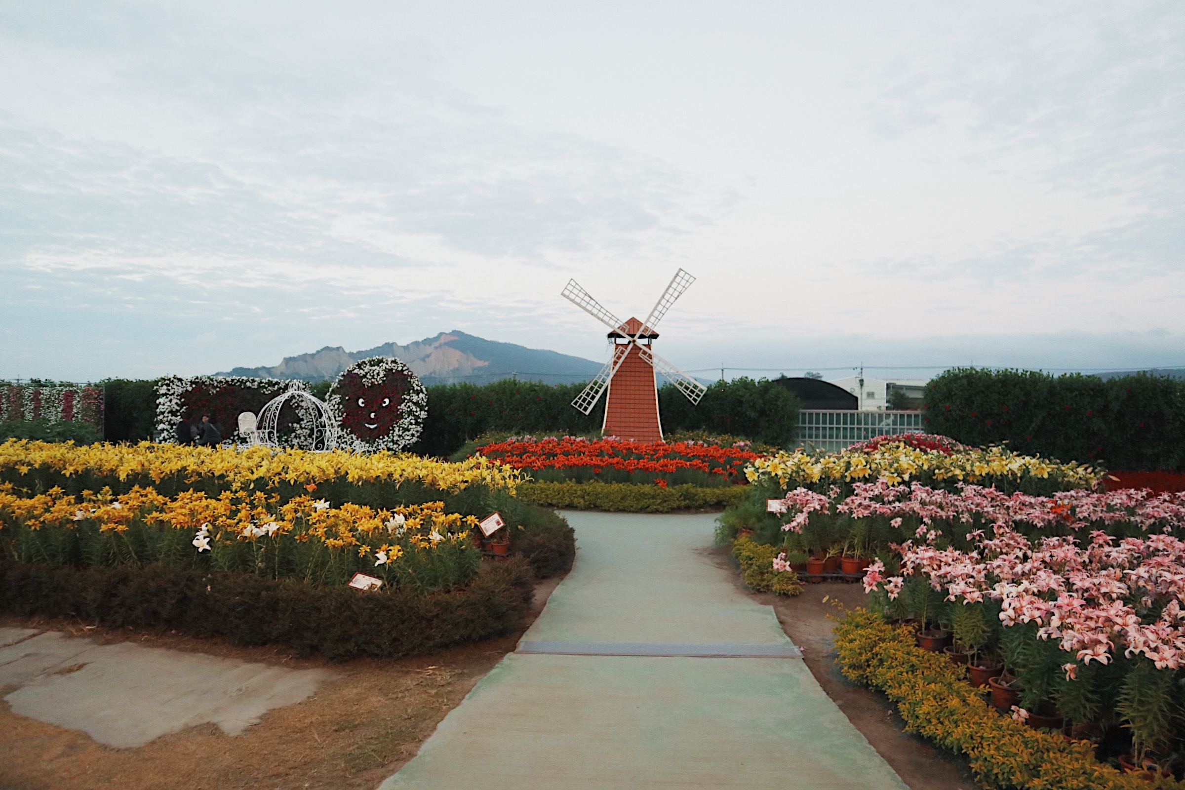 THE WINDMILL. This is just one of the many attractions here in Houli Flower Farm.