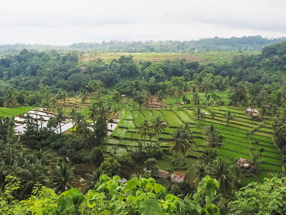 Rice terraces in Lombok.