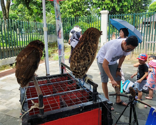 OWLS FOR SALE. One sad thing that we discovered while touring Borobudur was the exploitation of animals such as owls. These nocturnal animals, which should be sleeping at day and preying at night, were awake the entire time we were there.