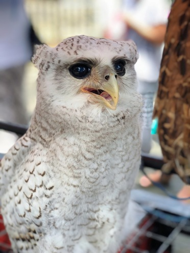 WHITE OWL. I'm not sure what this owl is but it looks sad just by looking at its eyes.