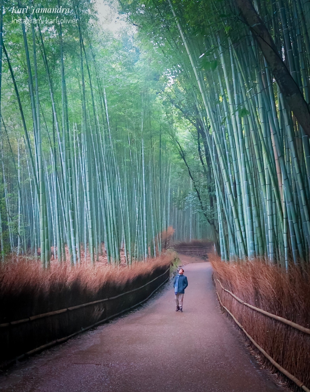 THE BEAUTIFUL ARASHIYAMA BAMBOO GROVE
